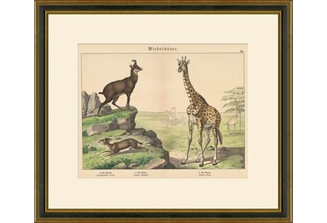 Antelopes & Giraffe Print, 1889