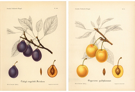 Plum Prints,  Pair,  1924