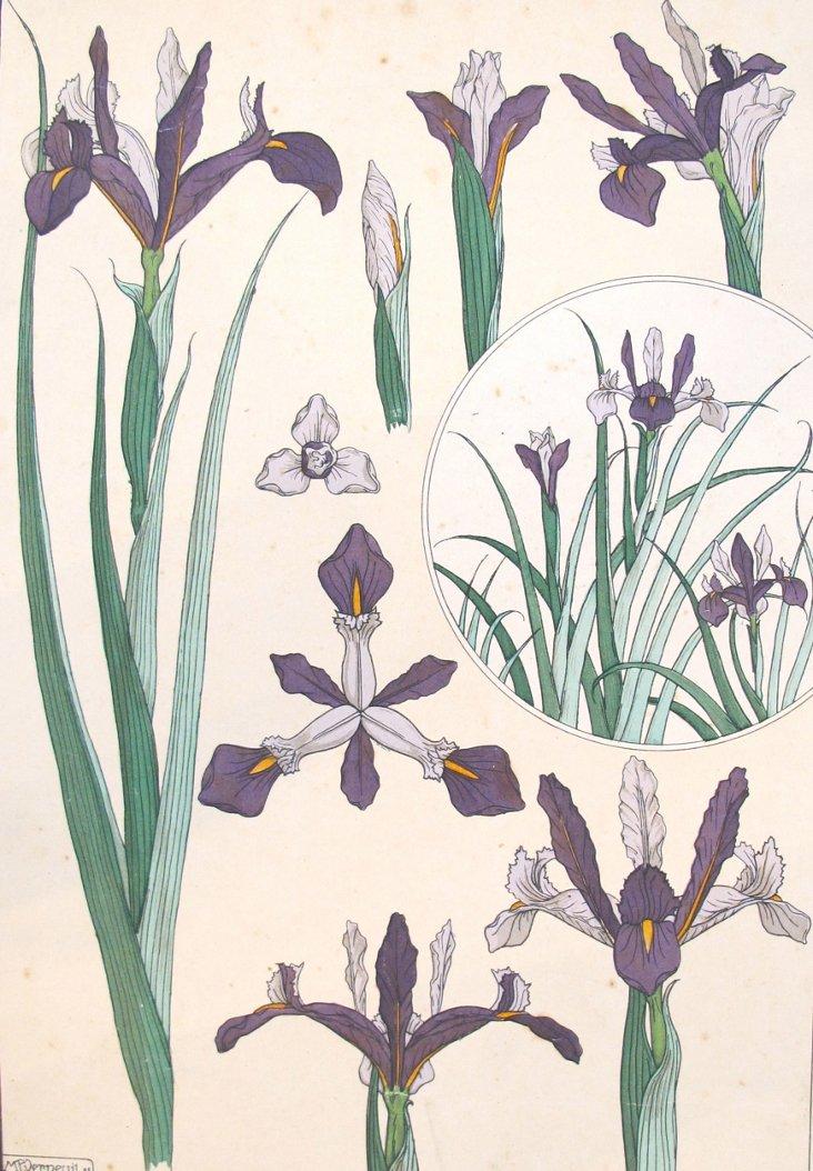 Antique Iris Decorator Sheet, 1885