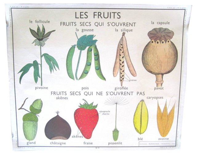 French Fruit & Plant Poster