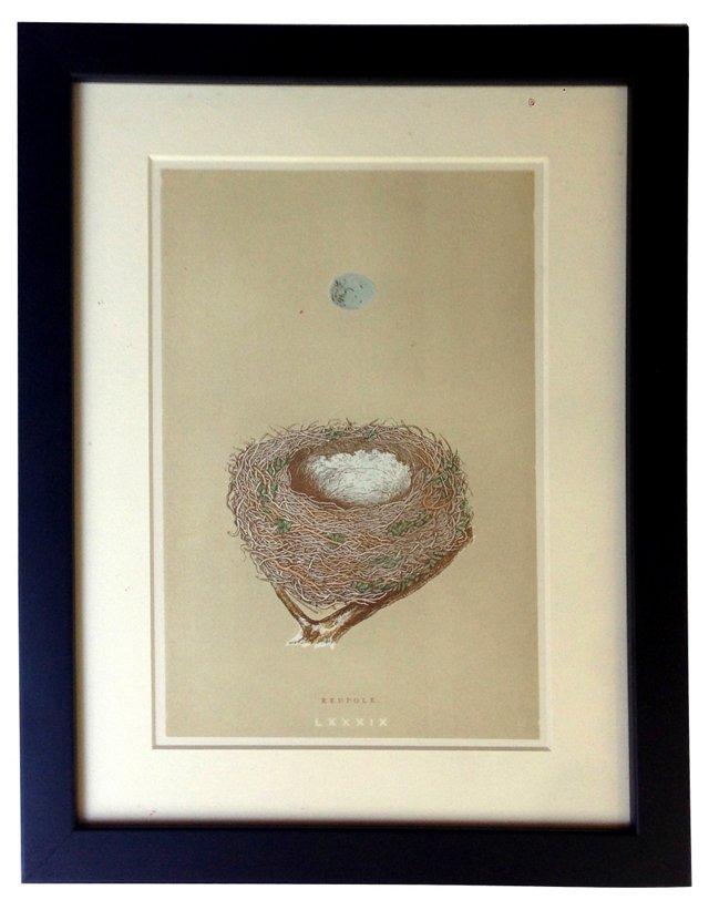Egg & Nest Engraving, Redpole