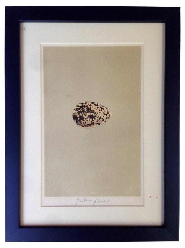 Golden Plover Egg Engraving
