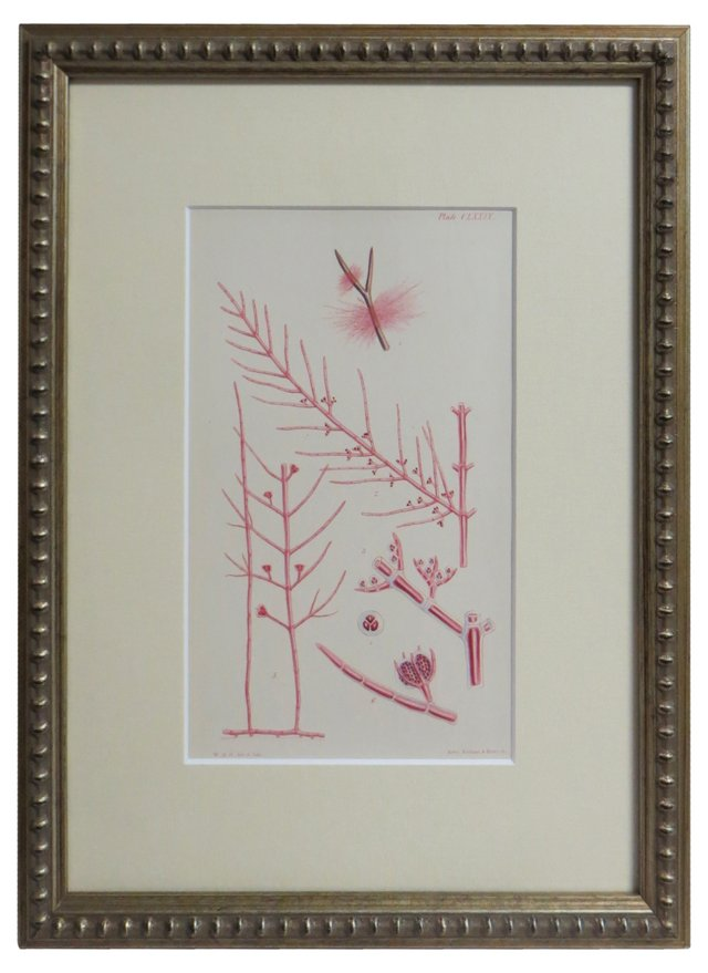 Seaweed Specimen Print, 1871