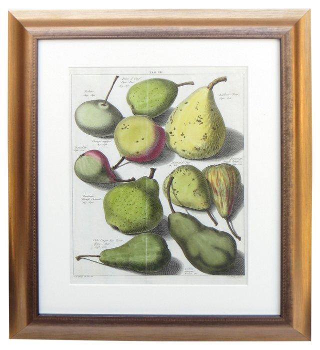 19th-C.    Pears      Engraving