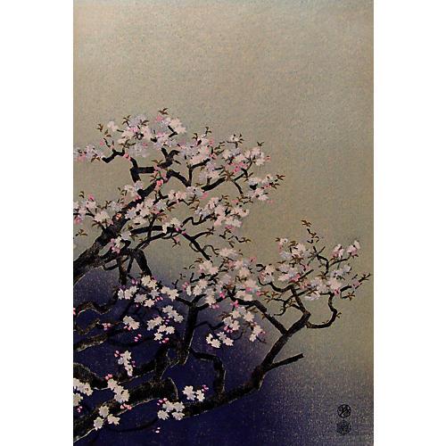Cherry Blossoms by Kotozuka