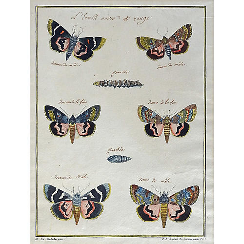 Hand-Colored Moth Etching, 1790