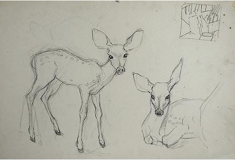 Fawn Pencil Study