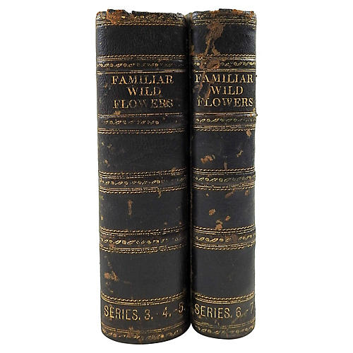 Familiar Wild Flowers 1902 2 Volumes