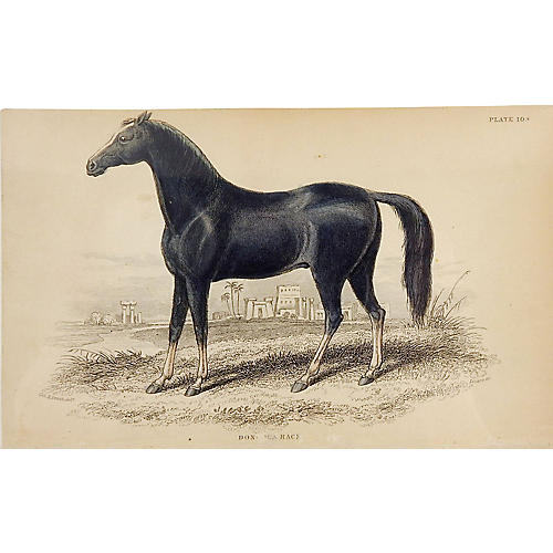 Equine Engraving, 1834