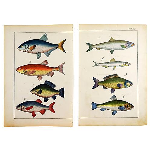 Fish Woodcut Prints, S/2