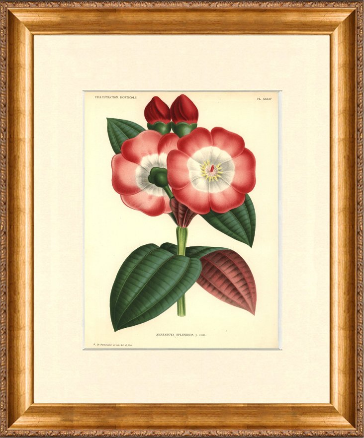 1870s Linden  Botanical Print