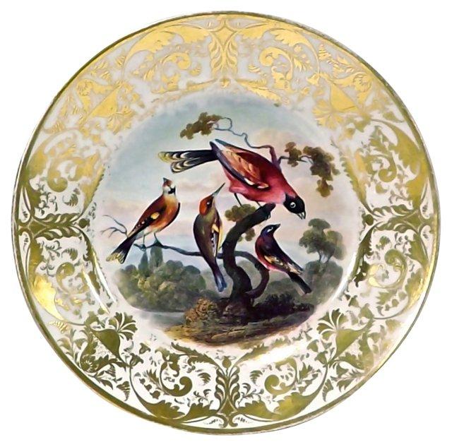 Antique Porcelain Royal Derby Bird Plate
