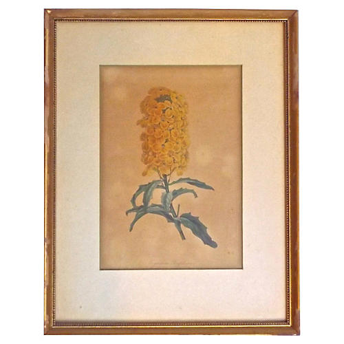 Antique Botanical Wildflower Engraving