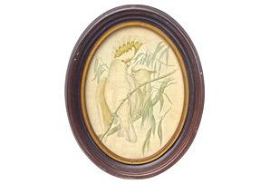 Antique Oval Framed Cockatoo Engraving*