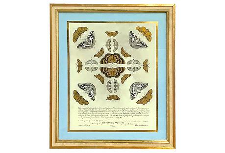 Moth Educational Plate Eglomise