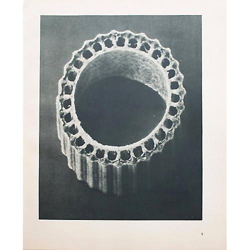1935 Photogravure N5-6 by Blossfeldt