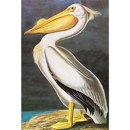 White Pelican by Audubon, 1966