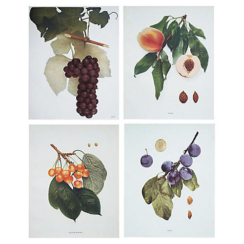 Antique Fruits of NY Prints, S/4