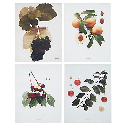 Fruits of NY Prints by Hedrick
