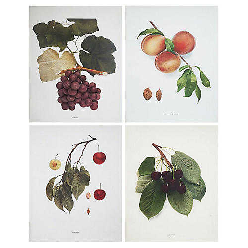 Fruit Prints by U.P. Hedrick, C. 1900