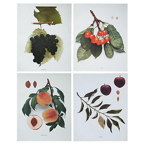 Antique Fruit Photogravures, S/4