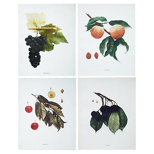 Fruit Photogravures by Hedrick, S/4