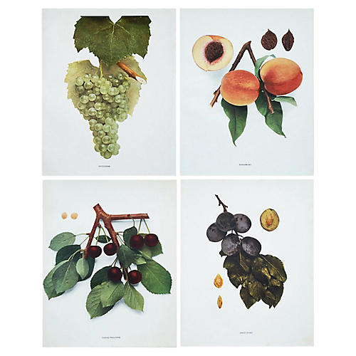 Antique Fruits of NY by Hedrick, S/4