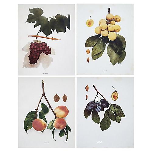 C.1900 Photogravures by Hedrick, S/4