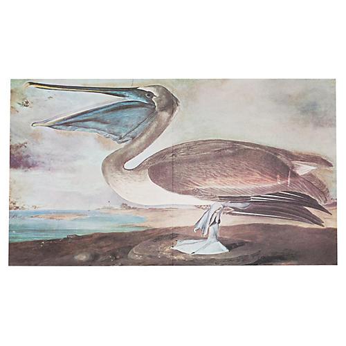 Audubon Pelican Lithograph, 1966