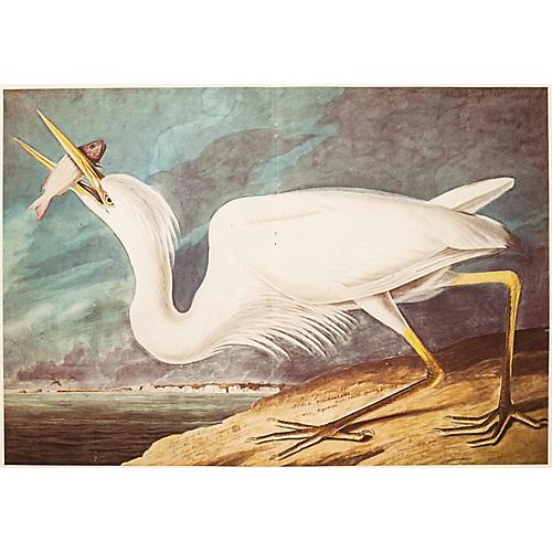 1966 White Heron XL Print by Audubon