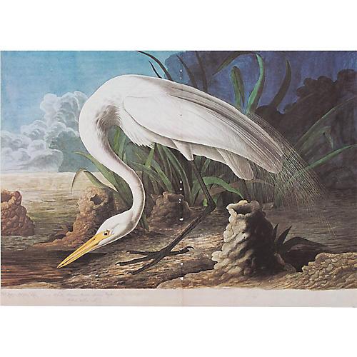 White Heron Lithograph by Audubon