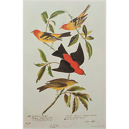 Tanagers Lithograph by Audubon, 1966