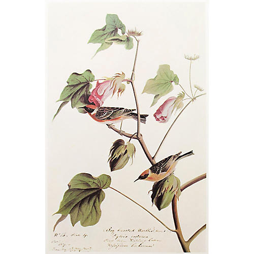 Bay-Breasted Warbler by Audubon, 1966