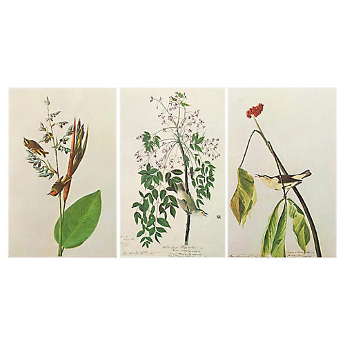 1966 Lithographs by John J.Audubon,S/3