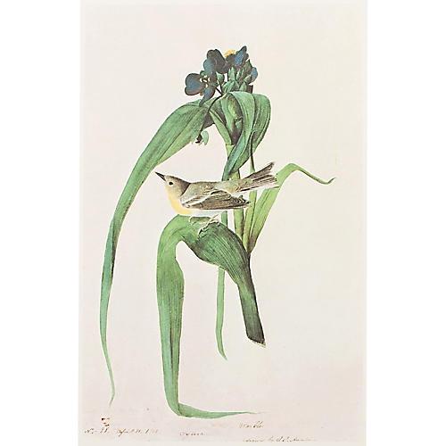 Pine Warbler by Audubon, 1966