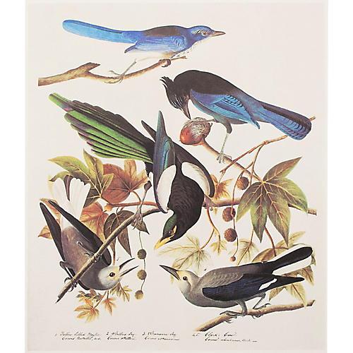 Birds of America by Audubon, 1966