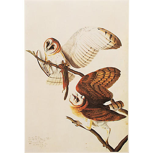 Barn Owls by Audubon, 1966