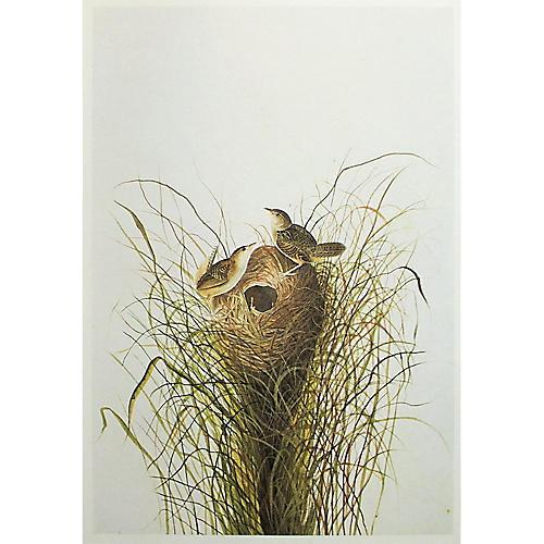 1966 Audubon, Short-Billed Marsh Wren