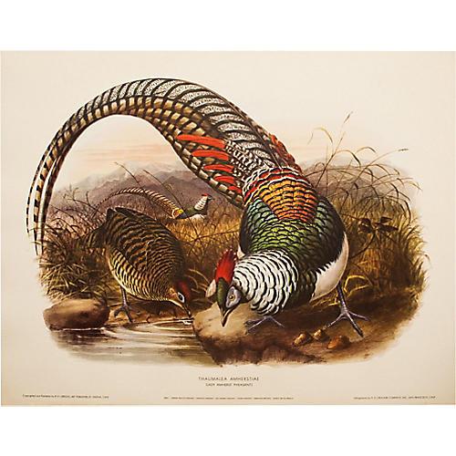 Lady Amherst Pheasant by D.G. Elliot