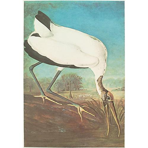 1966 Audubon, Wood Ibis