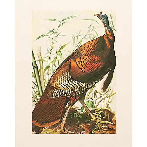 1966 Audubon, Wild Turkey