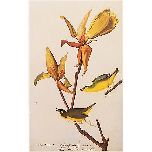 Kentucky Warbler by Audubon, 1966