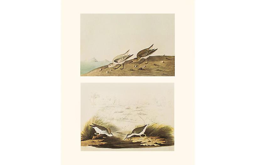 Audubon, Sanderling & Spotted Sandpiper