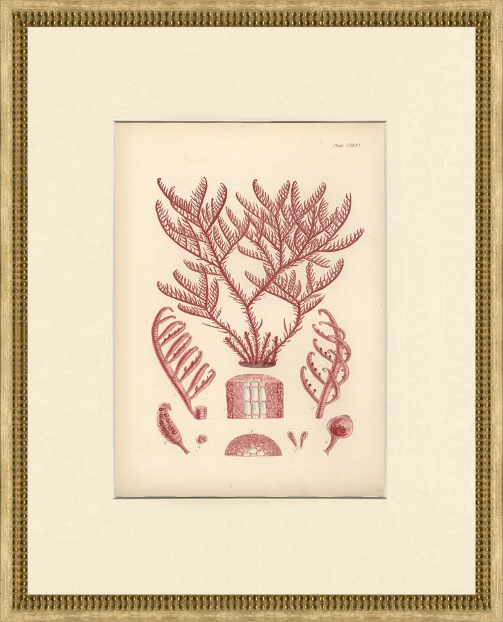 Seaweed         Print, 1871