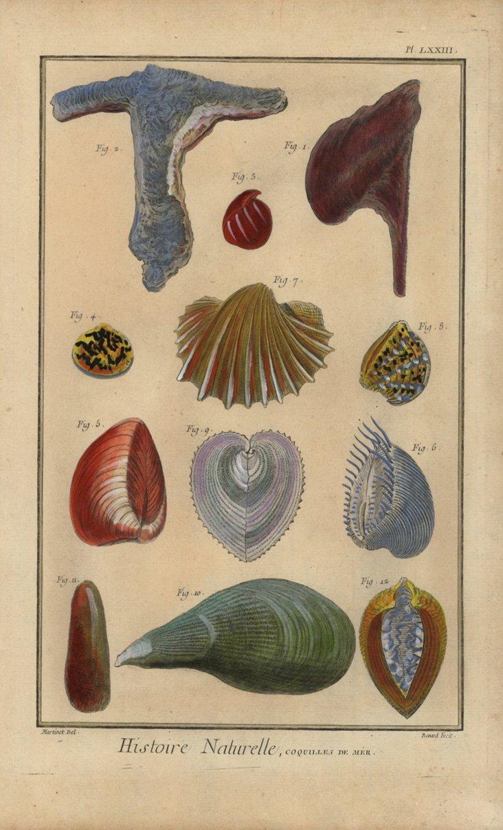 Hand-Colored Seashells, C. 1770
