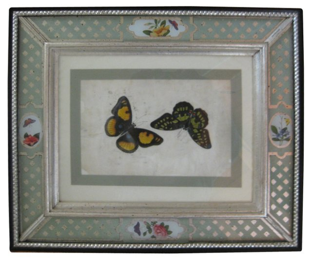 Antique Canton Butterfly  Watercolor
