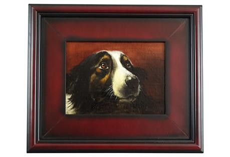 Sporting Dog Portrait
