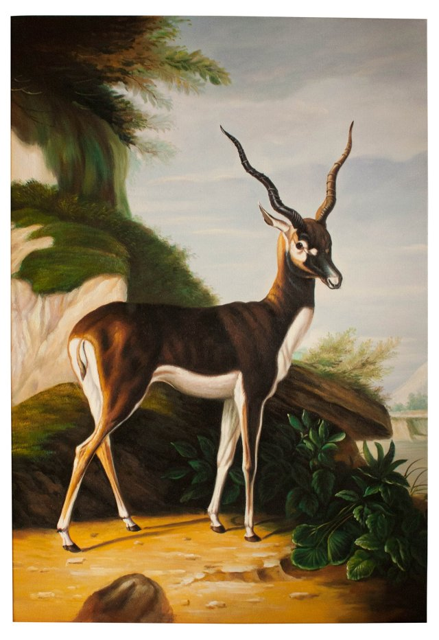 Antelope Oil Painting