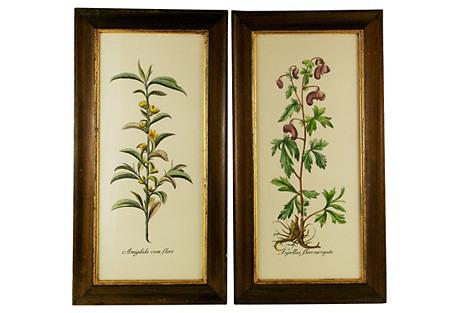 Italian Botanical Engravings, Pair