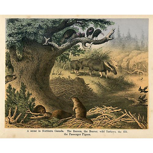 Scene in Northern Canada, C. 1860